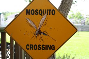 mosquito-crossing-1540616