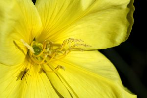 yellow-flower-1345930